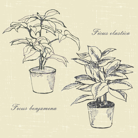 plant pot:  ficus, flowers in pots, hand drawn sketches