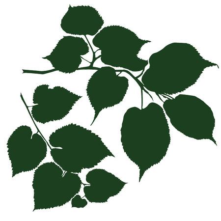 lindeboom: silhouet van de takken van de lindeboom