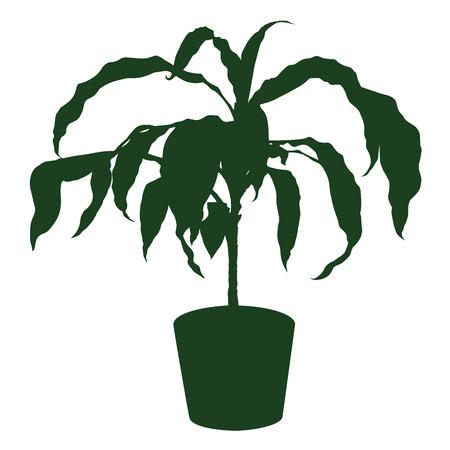 houseplant: silhouette the houseplant dracaena in pot. Vector illustration
