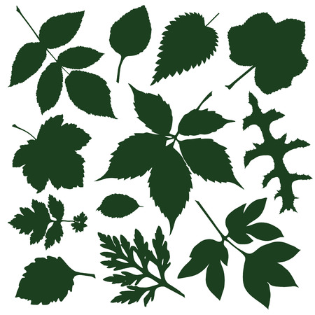 nettle: set silhouettes green decorative leaves. vector illustration