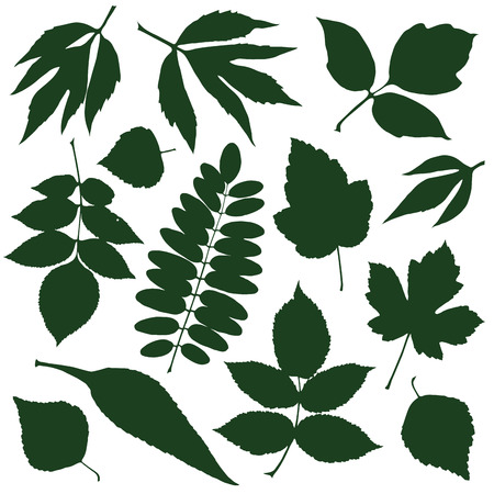 set silhouettes green decorative leaves. vector illustration