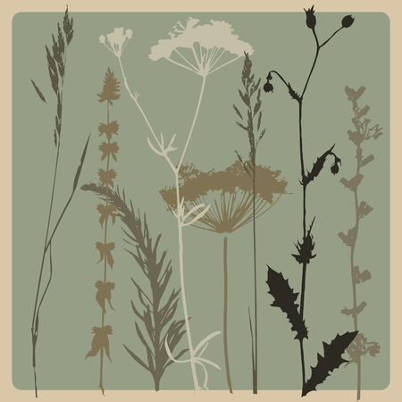 grasses: background with silhouettes of various grasses and branches