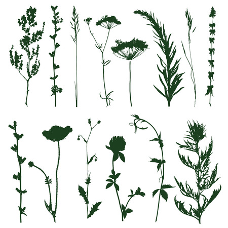 silhouettes of decorative elements of grass and twigs Vector