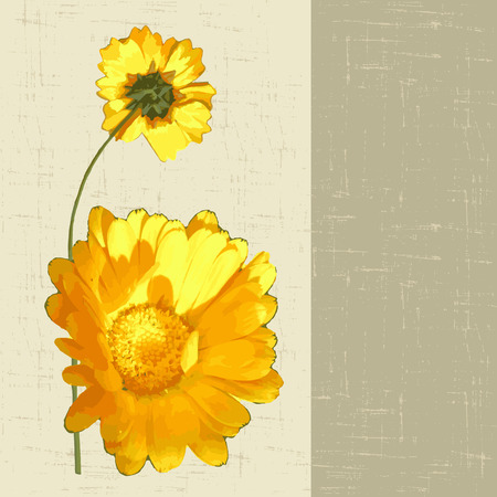 calendula: decorative background with yellow flowers calendula. vector illustration