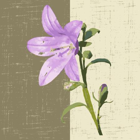 campanula: decorative background with flower campanula. vector illustration