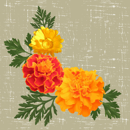 calendula: decorative background with calendula and marigolds. vector illustration Illustration