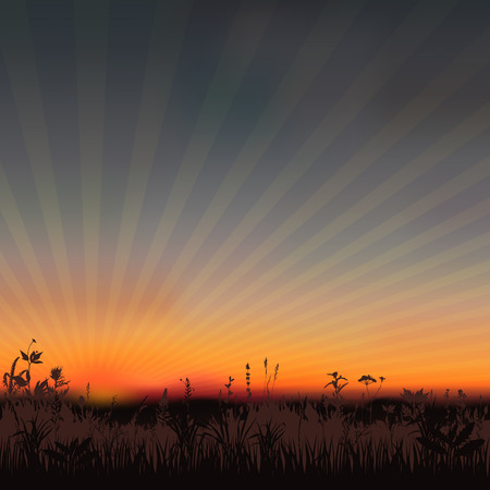 steppe: Summer abstract sunset background with grass. Vector illustration.