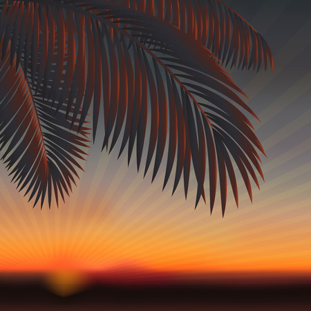 backlight: Summer abstract sunset background with palm leaves. Vector illustration. Stock Photo