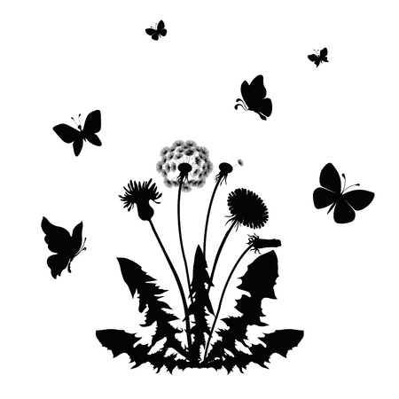 undergrowth: silhouette blossom dandelion with butterflies. vector illustration