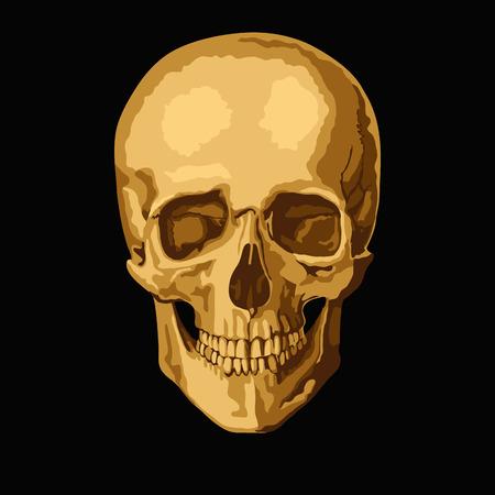 yellow black: cr�neo humano de oro sobre fondo negro. ilustraci�n vectorial