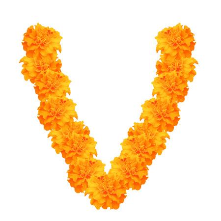 Garland van goudsbloemen geïsoleerd op een witte achtergrond, bloemen voor decoreren, symbool van de Mexicaanse vakantie Dag van de dood en Indiase Gelukkige Divali. Vector illustratie.