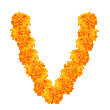 Garland of marigolds isolated on white background, flowers for decorate, symbol of mexican holiday Day of dead and Indian Happy Divali. Vector illustration.