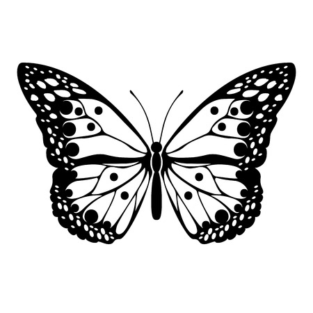 Black silhouette of butterfly on white background. Decorative abstract design element. Vector illustration Ilustrace