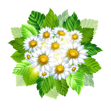 Background with chamomiles. Spring decorative flowers. Vector illustration.