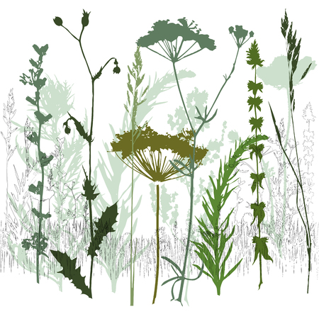 Background with grass and branches. Collection of wild and garden plants. Set of herbs, branches, flowers and other botanical elements. Vector illustration