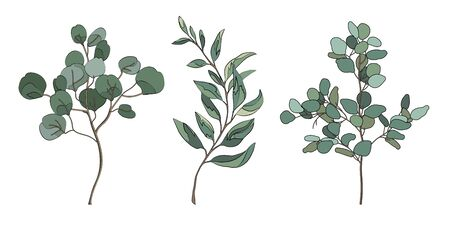 Eucalyptus silver dollar greenery. Set of the eucalyptus branches. Collection of the natural design elements. Vector illustration.
