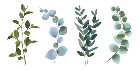 Eucalyptus silver dollar greenery. Set of the eucalyptus leaves. Collection of the natural design elements. Vector illustration.  イラスト・ベクター素材