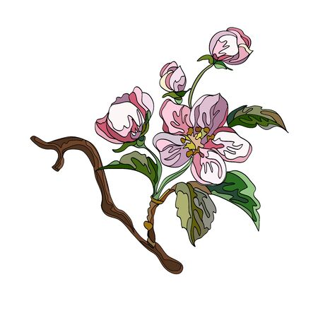 Collection of apple ornaments with branches, leaves and flowers. Set of decorative floral elements. Vector illustration