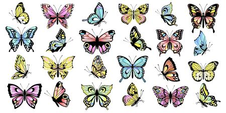 Set of different colored butterflies. Collection of colorful vector butterflies. Vector illustration