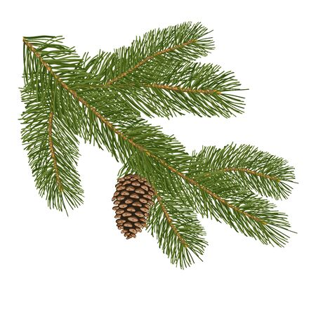 Christmas tree branch with pine cones isolated on white background. Decorative element for Christmas cards. Vector illustration.
