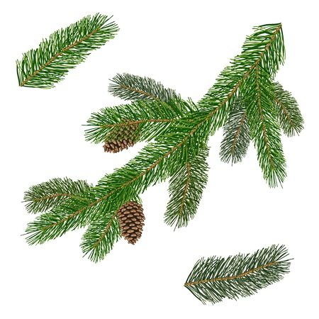Pine branches isolated on white background. Set of different Christmas tree branches. Vector illustration.  イラスト・ベクター素材