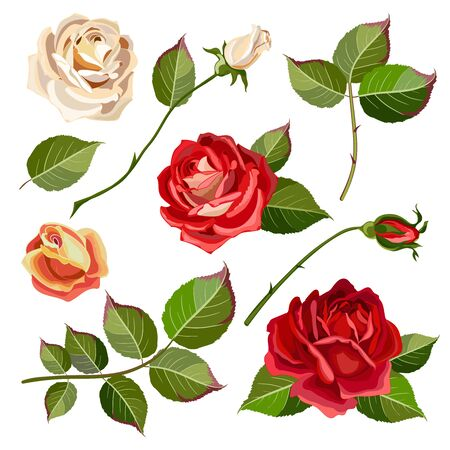 Collection of flowers, leaves and rose buds.Set of floral and decorative elements. Naturalistic drawing of red roses and green leaves. Vector illustration Illustration