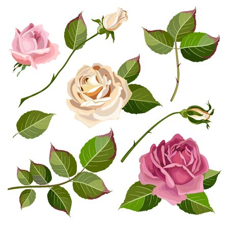 Collection of flowers, leaves and rose buds.Set of floral and decorative elements. Naturalistic drawing of pink roses and green leaves. Vector illustration Illustration
