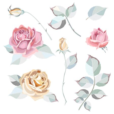 Collection of flowers, leaves and rose buds.Set of floral and decorative elements. Naturalistic drawing of pink, beige roses and light green leaves. Vector illustration Illustration
