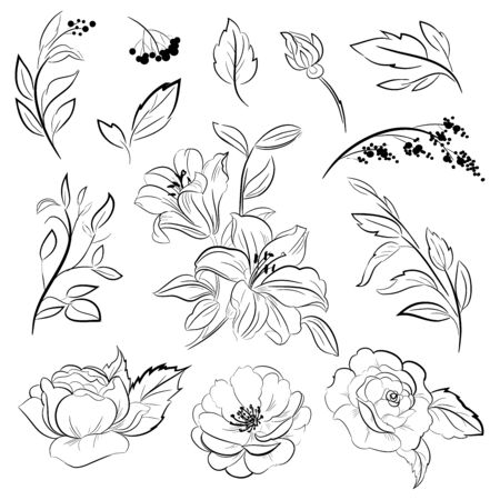 Flowers and leaves line drawing. Vector hand drawn outline floral set. Black ink sketch with roses, peonies, branches and berry contour. Hand drawing roses and lily flowers illustration.