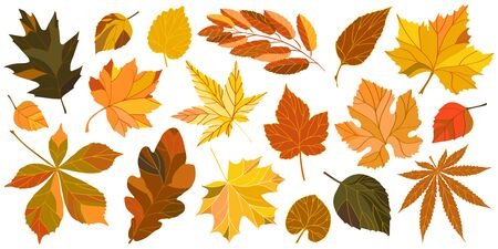 Collection of autumn leaves. Isolated vector set of chestnut, oak, maple, mountain ash, linden, hops and birch leaves. Vector illustration. Vettoriali