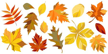 Collection of the autumn leaves. Vector illustration.
