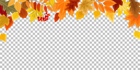 Background with autumn leaves. Autumn border for your design. Vector illustration.