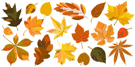 Collection of autumn leaves. Isolated vector set of chestnut, oak, maple, mountain ash, linden, hops and birch leaves. Vector illustration.  イラスト・ベクター素材