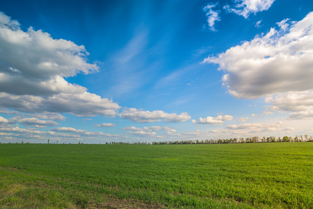 phantasy: green field and the deep blue sky on the sunset