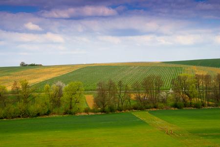 Rural landscape. Farmland. Agriculture.