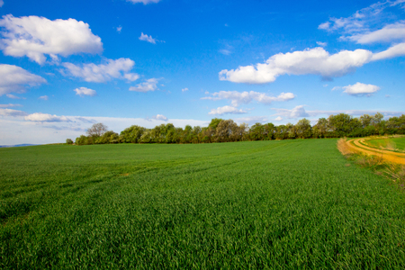 1625000 Rural landscape. Farmland. Agriculture. Photo in the Czech Republic, Europe