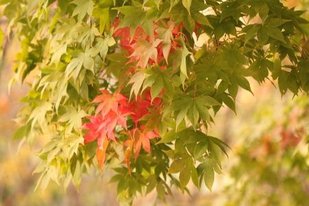 가을 시작