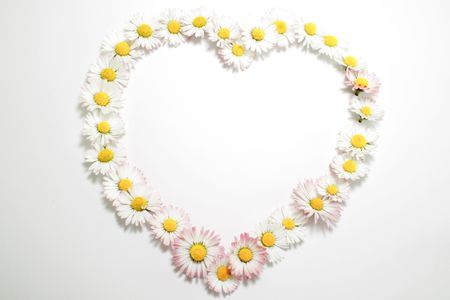 Daisies heart on the white background