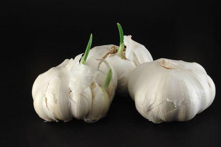 coking: garlic Stock Photo