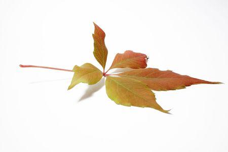 autumnal leaf Stock Photo