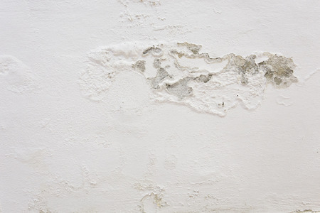 mold: mold on the wall