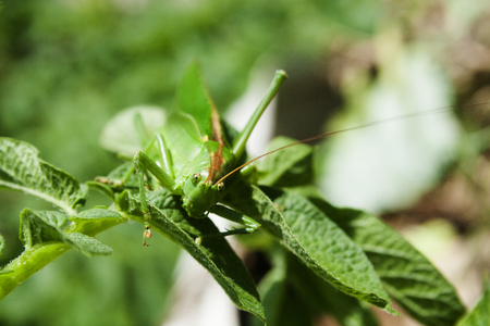 grasshoper on the meadow