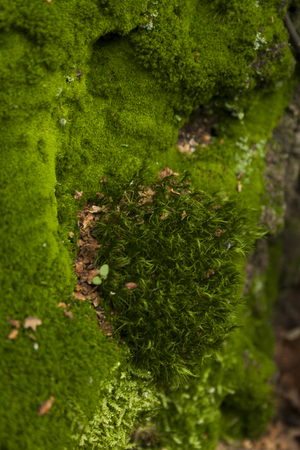 Moss - natural background
