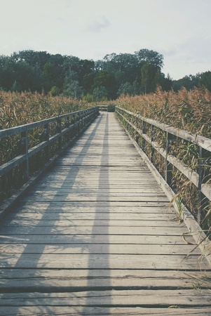 Wooden bridge leading to forest Stock Photo