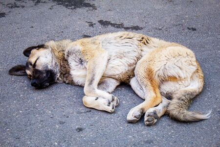 stray dog sleeping near the wall. street dog. selective focus.animals Stock Photo