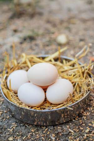 Fresh chicken eggs in the hay on a farm. Selective focus.food Foto de archivo