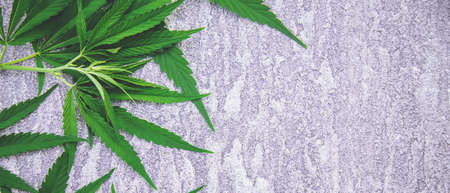 Cannabis leaves on concrete background. Selective focus. nature.