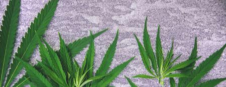 Cannabis leaves on concrete background. Selective focus. nature. Stock fotó