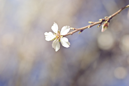 ambiente: Beautiful blossoming branch in spring