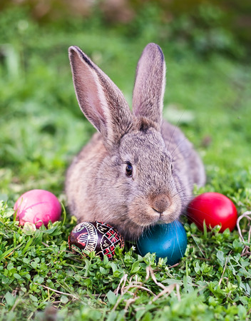 brown hare: Easter rabbit and painted Easter eggs around him
